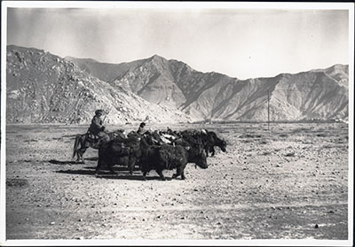 Yaks and trader in Lhasa Valley