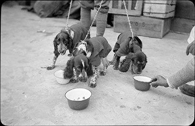 Dogs being fed at Phari