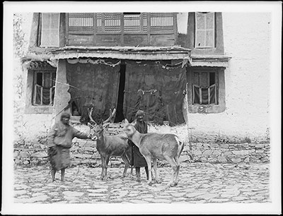 Stag outside Reting Monastery, 1921