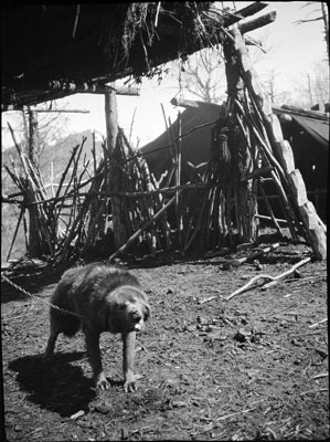 Dog in Khampa camp near Yatung