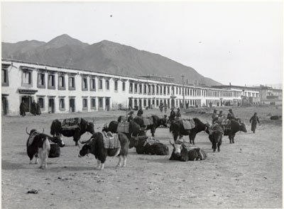 Yaks in street in outer Lhasa