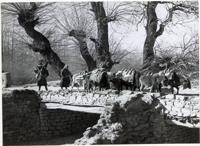 Mules and dzo crossing a stonework bridge