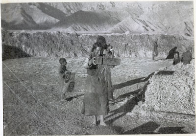 Barley harvest in Lhasa